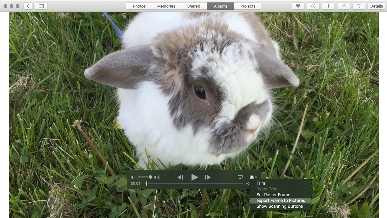 Extracting a still image from a video using macOS Photos