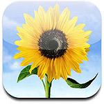 Sharing Multiple Photos on iOS 1